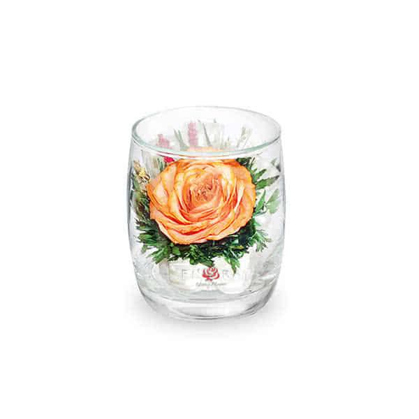 Оранжевая роза с белой лентой в стакане ivory