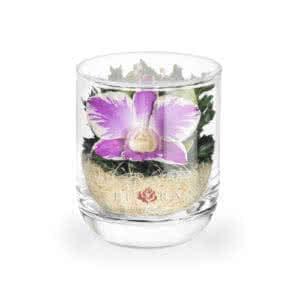Орхидея в стакане s-top