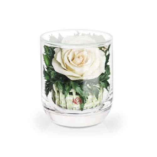 Айвори роза в стакане s-top