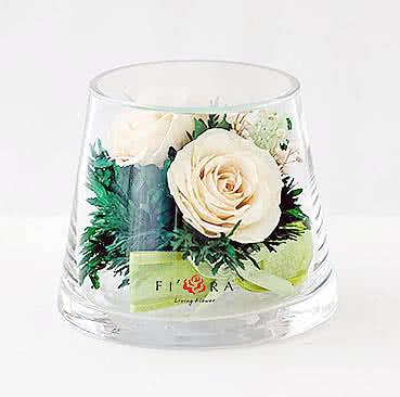 Цветы в стекле (вакууме) - Айвори розы в низком конусообразном цилиндре - 40788