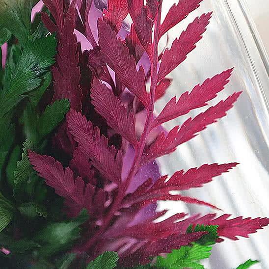 Цветы в стекле (вакууме) - Фиолетово-белые и сиренево-белые орхидеи в изогнутой вазе - 44649