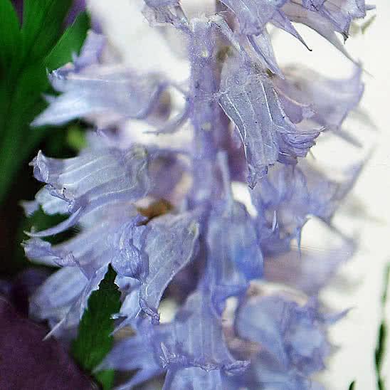 Цветы в стекле (вакууме) - Фиолетово-белые и сиренево-белые орхидеи в малой каплевидной вазе - 44632