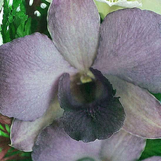 Цветы в стекле (вакууме) - Фиолетово-белые и сиренево-белые орхидеи в средней каплевидной вазе - 44755