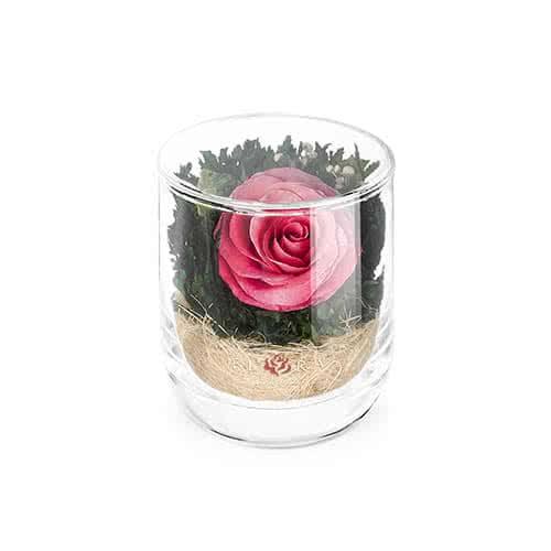 Розовая роза в стакане s-top