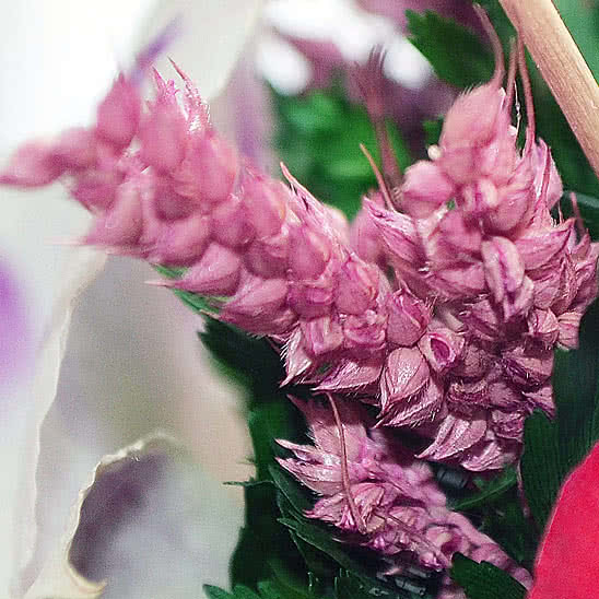 Цветы в стекле (вакууме) - Красные розы и королевские орхидеи с фиолетово-белыми диантусами в большой круглой вазе со скошенным верхом - 49989