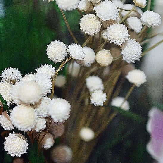 Цветы в стекле (вакууме) - Мини и оригинальные в вазе формы ангела с сердцем - 44908