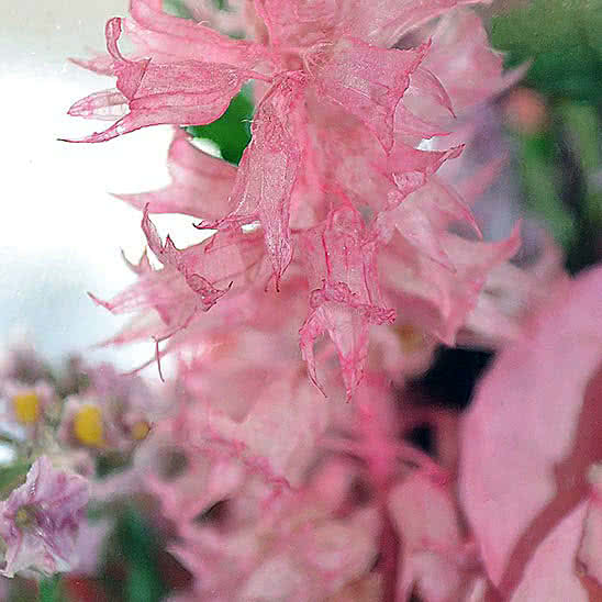 Цветы в стекле (вакууме) - Розовато-белые и фиолетовые орхидеи с айвори розами в изогнутой вазе - 42454
