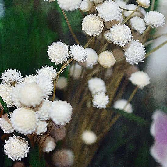 Цветы в стекле (вакууме) - Розовато-белые и фиолетовые орхидеи с айвори розами в средней плоской круглой вазе - 42577