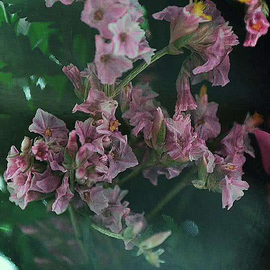 Цветы в стекле (вакууме) - Ярко-розовые и светло-розовые розы в малой овальной вазе со скошенным верхом - 48494