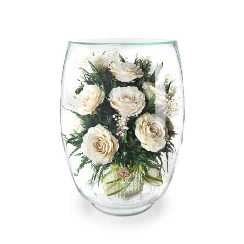 Айвори розы в большом бутоне тюльпана